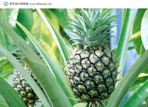 Material fruits and vegetables 14012