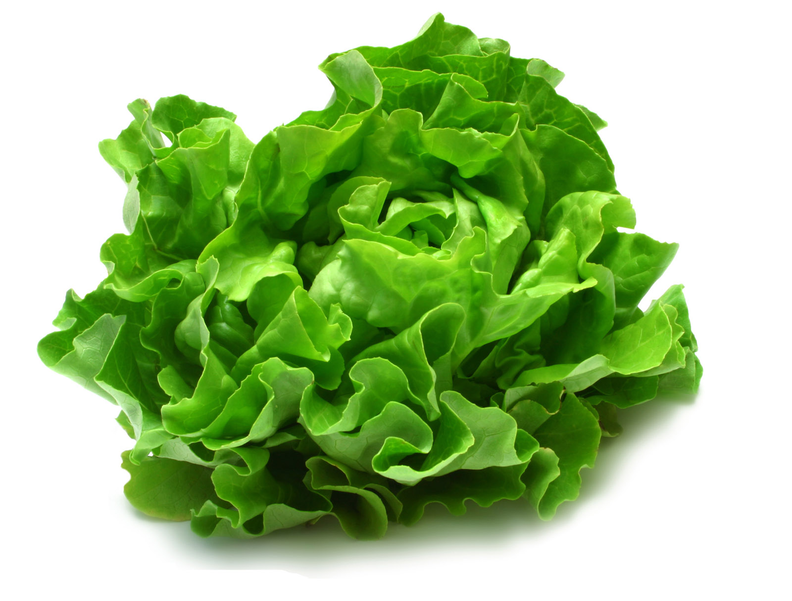 High-definition picture lettuce 24566