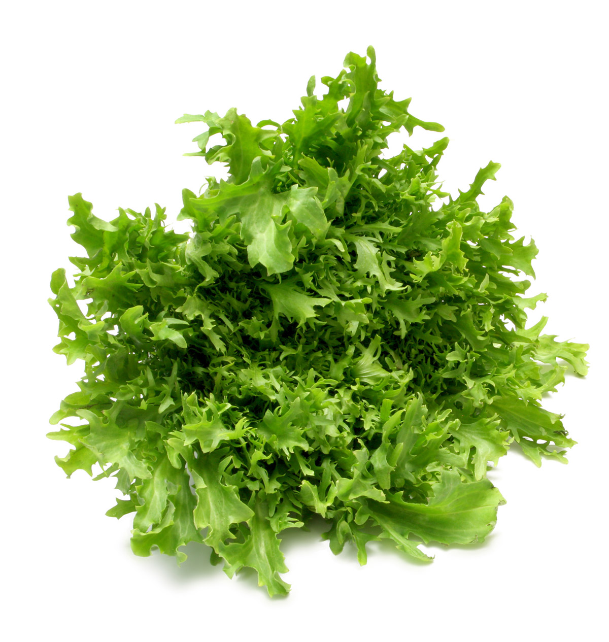 Lettuce Stock Photo 25131