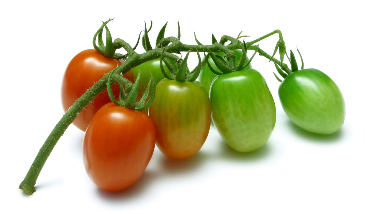 Cherry tomatoes stock photo 25148