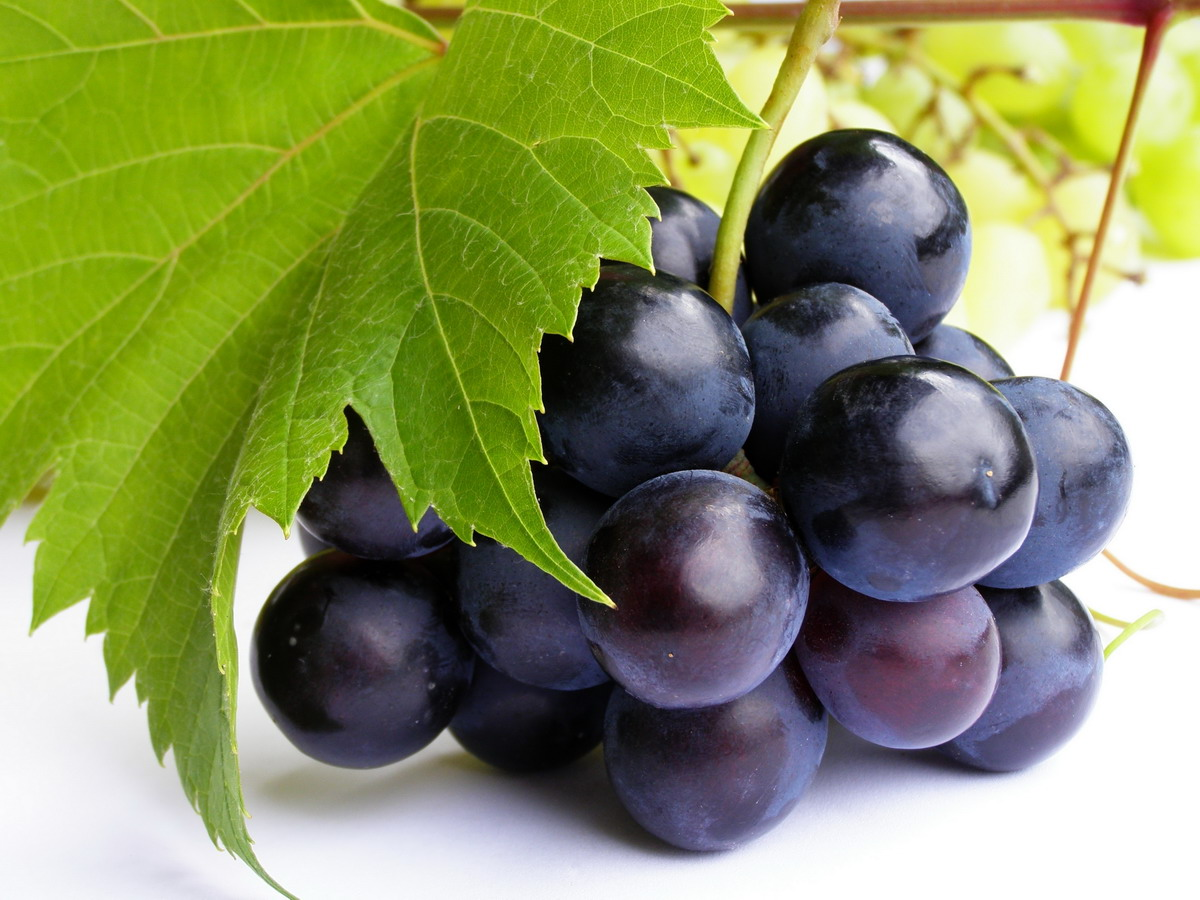 High-resolution photo grape 8494