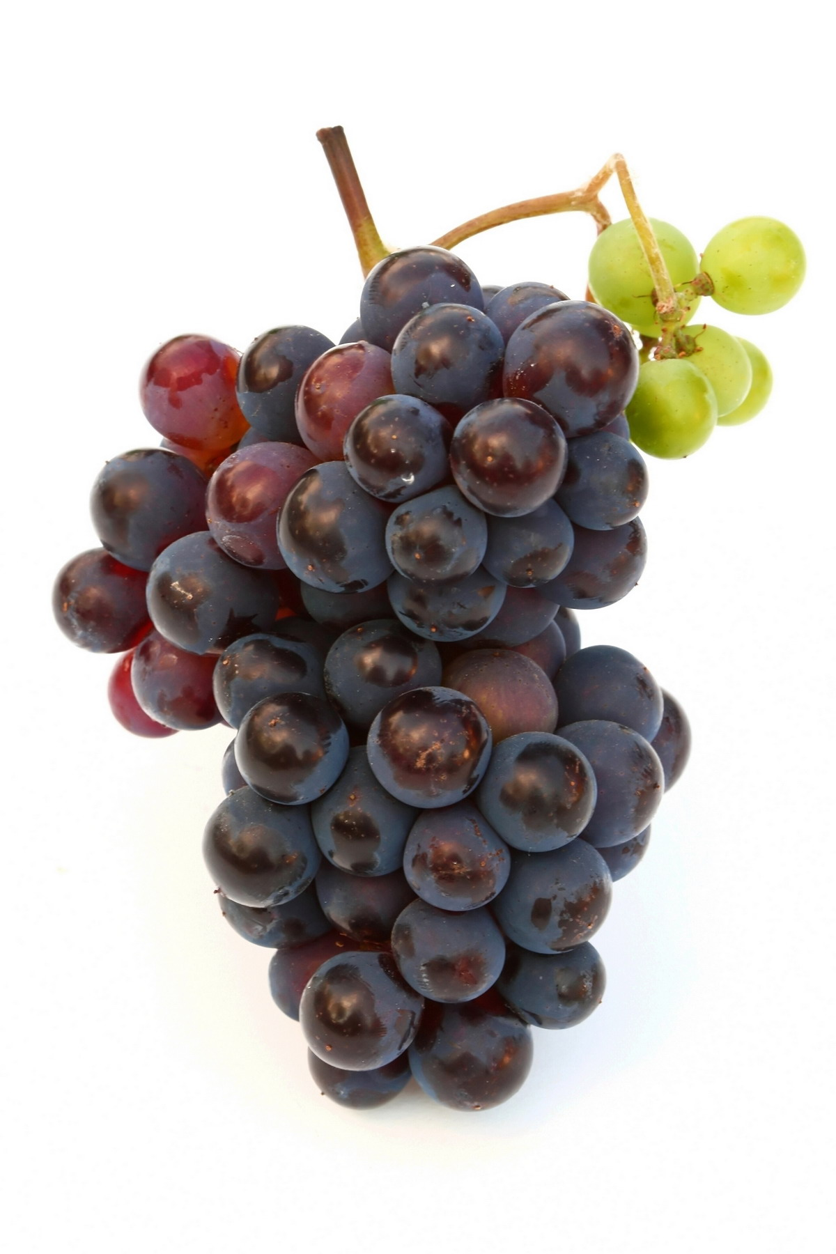 High-resolution photo grape 8717