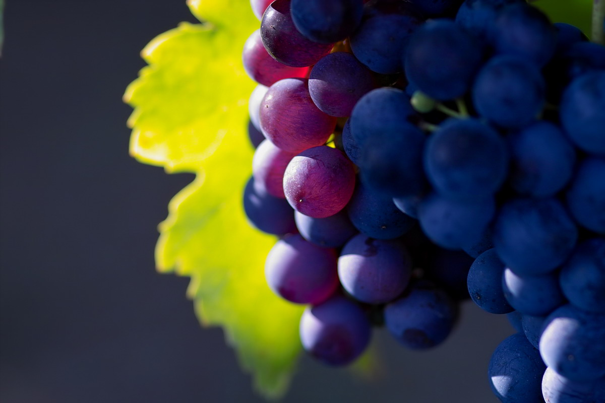 High-resolution photo grape 8826