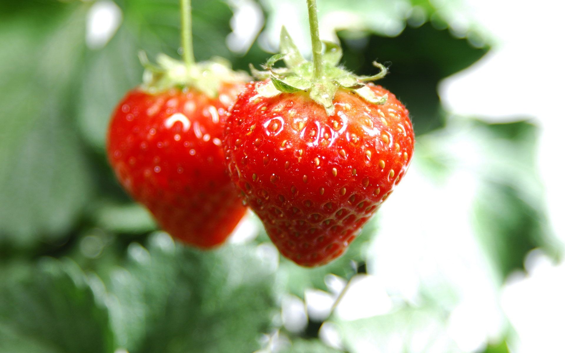 High-definition material Strawberry 4956