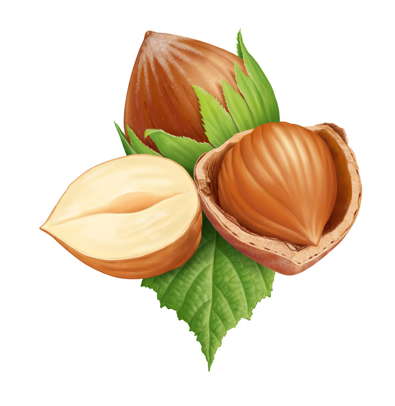 Nuts and nut image 1334