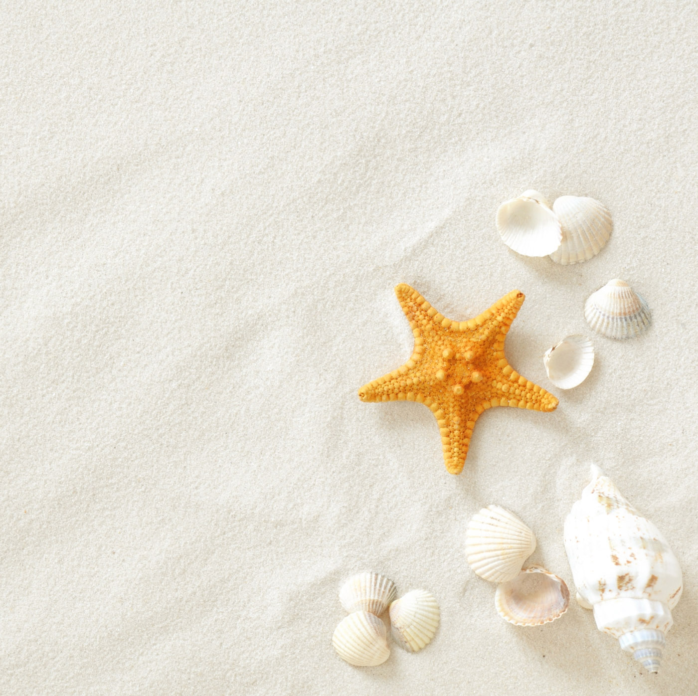 Beach sand and shells 23566