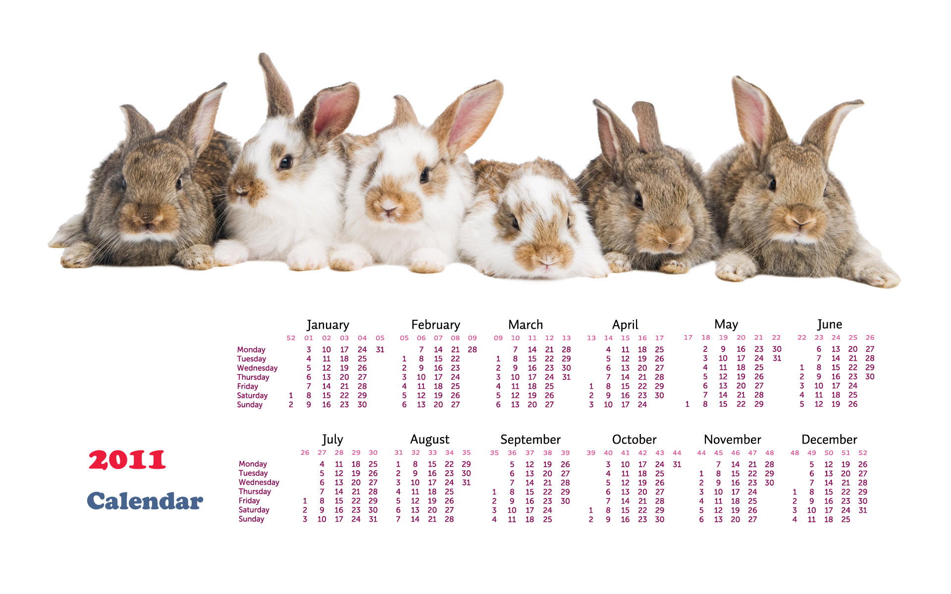 Calendar Year of the Rabbit 14383