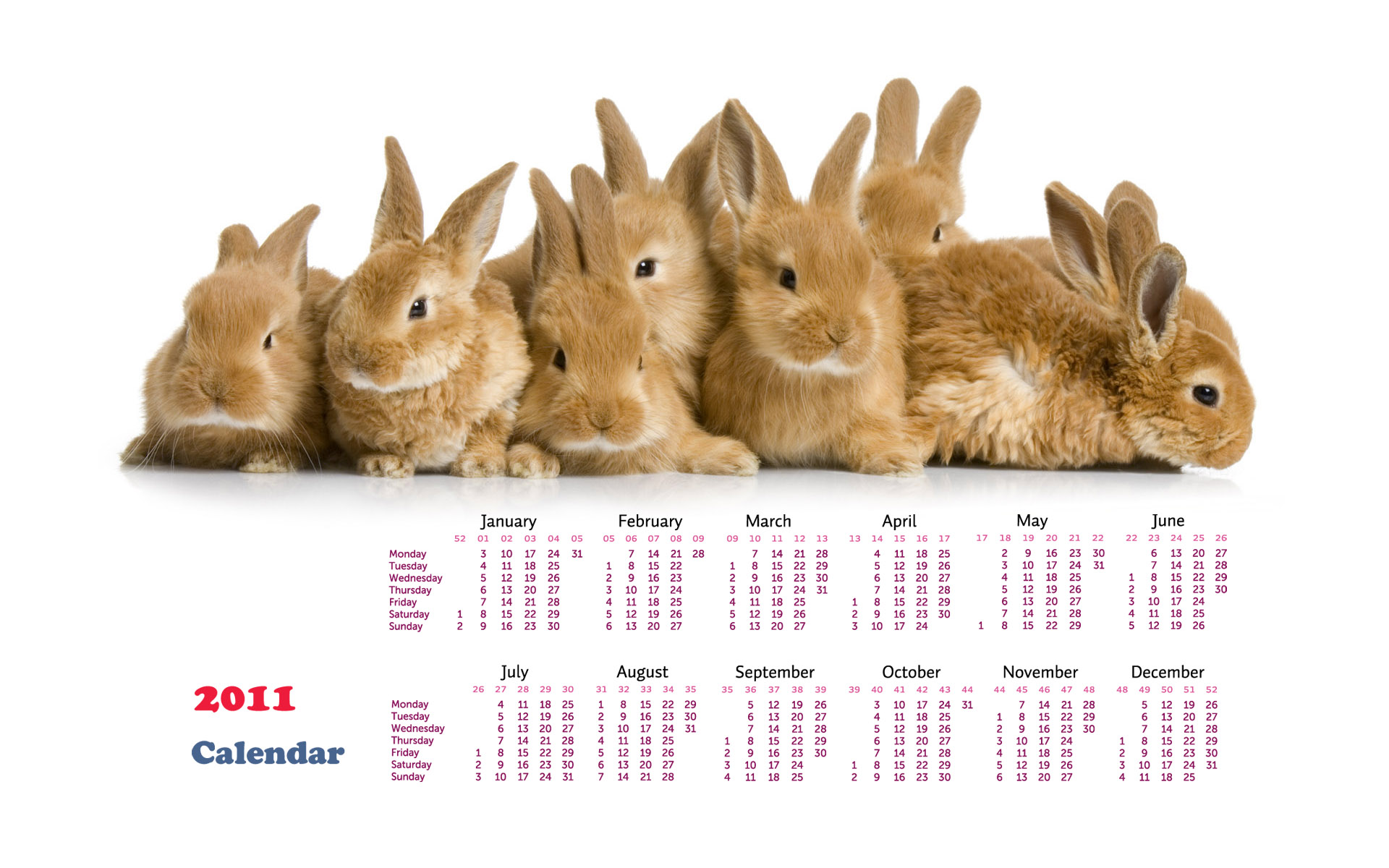 Calendar Year of the Rabbit 14451