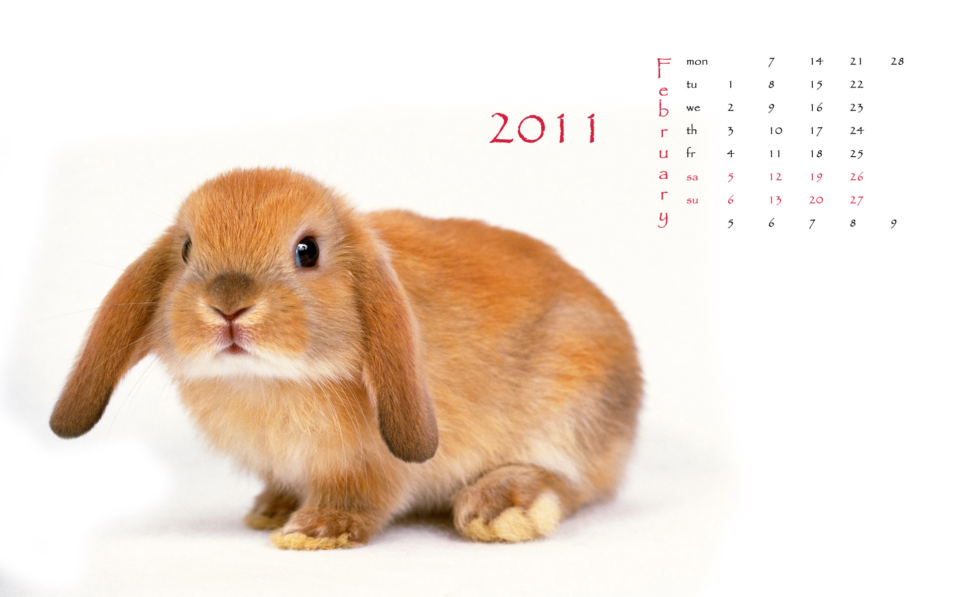 Calendar Year of the Rabbit 14586