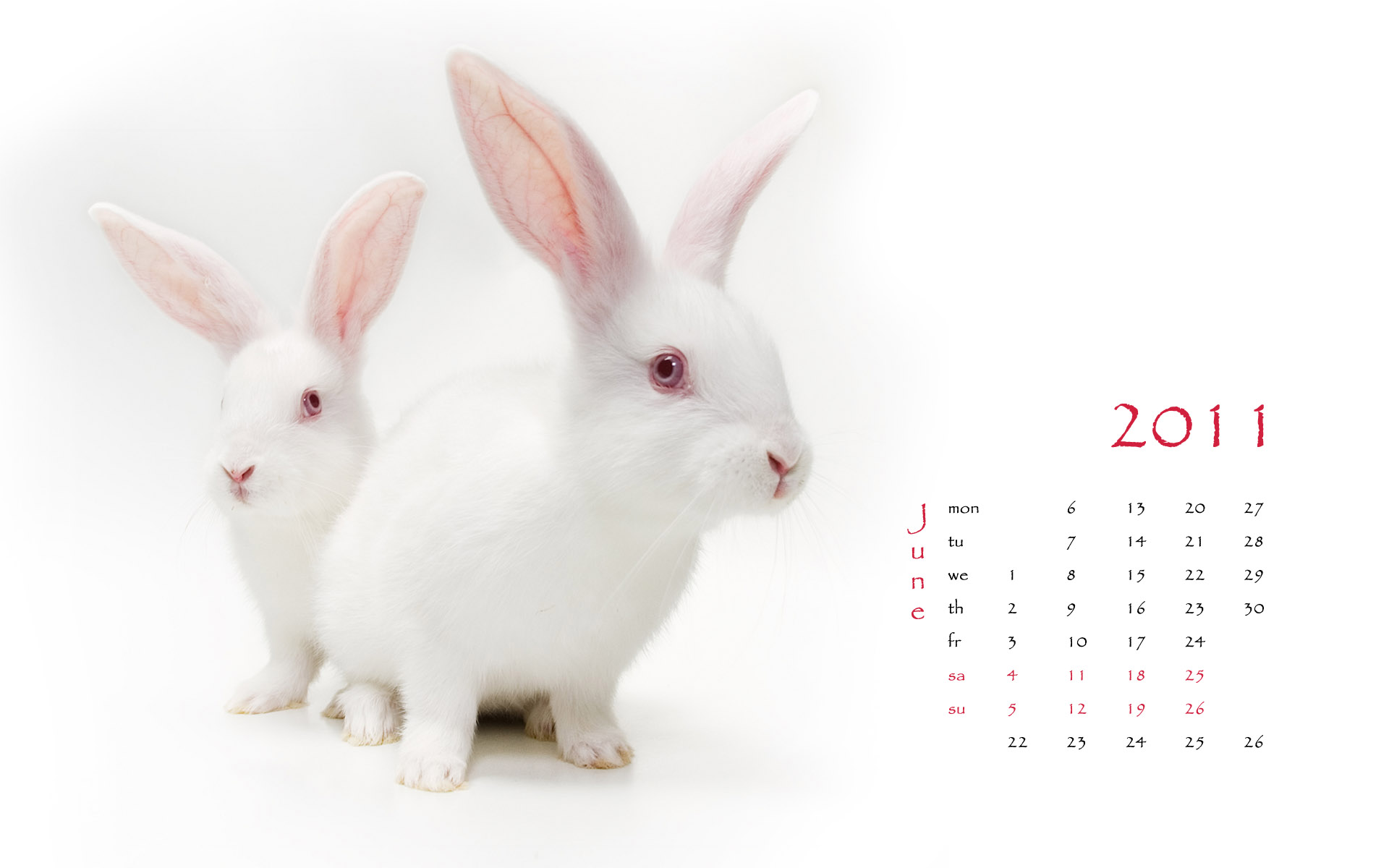 Calendar Year of the Rabbit 14854
