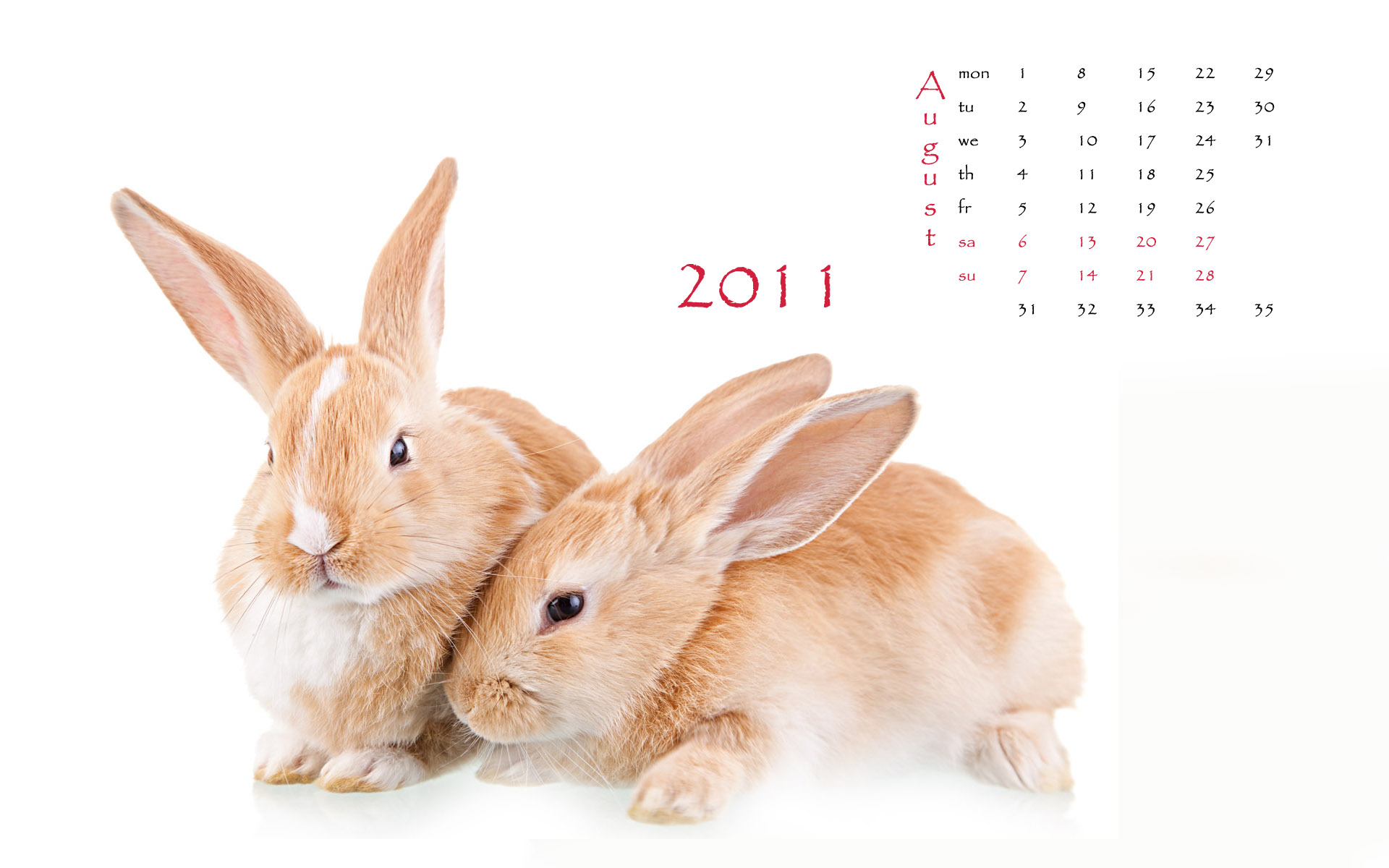 Calendar Year of the Rabbit 14986