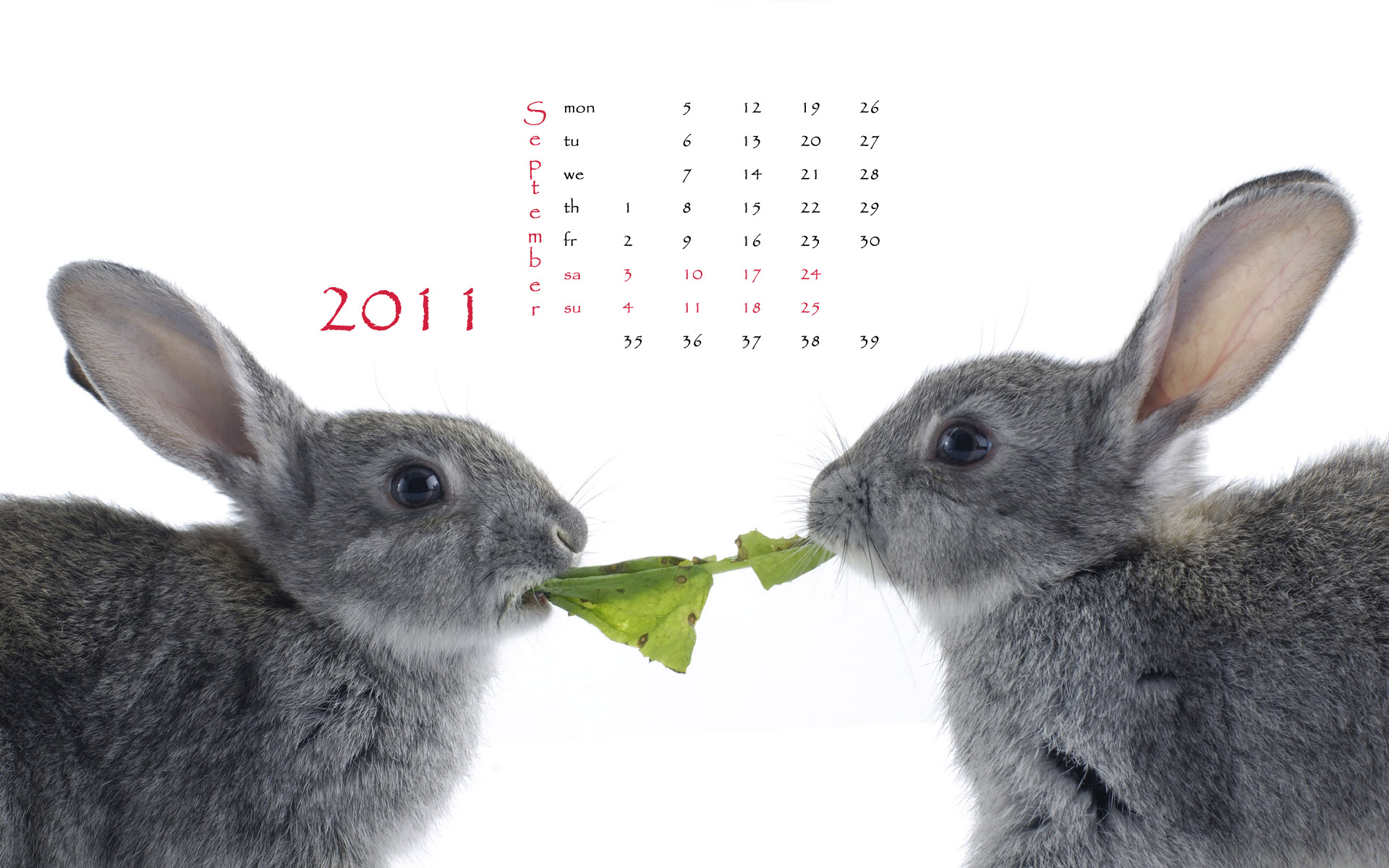 Calendar Year of the Rabbit 15051