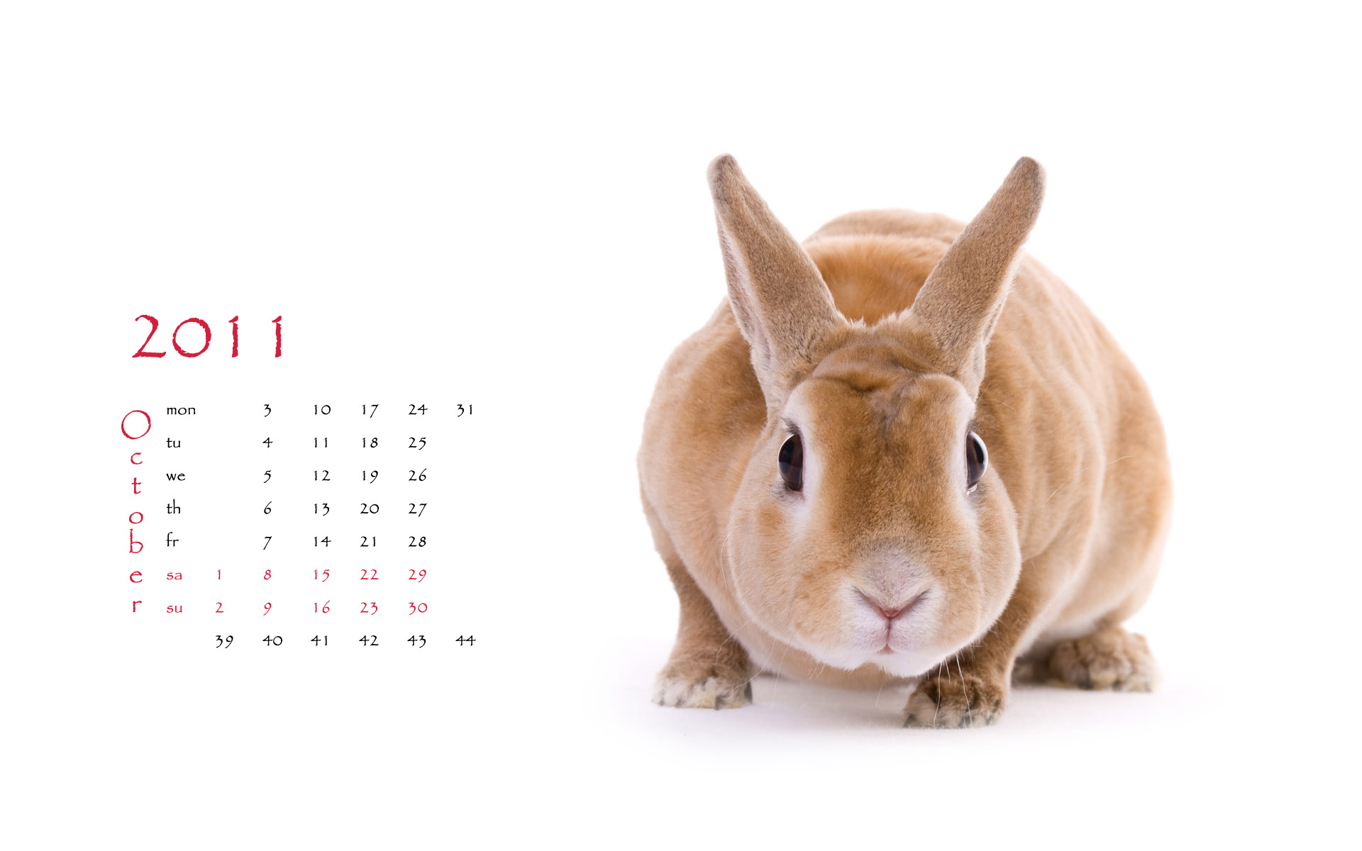 Calendar Year of the Rabbit 15115