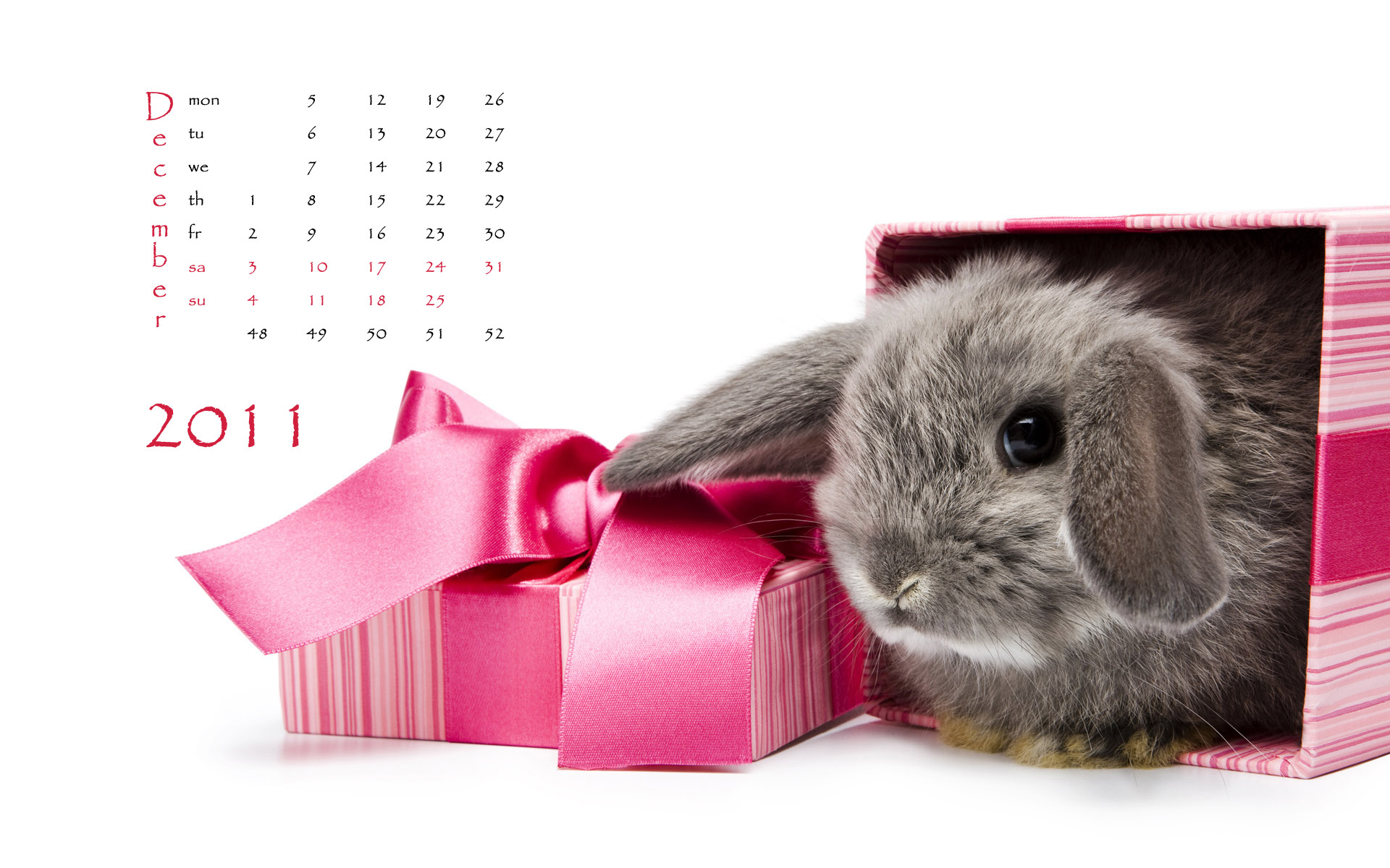 Calendar Year of the Rabbit 15241