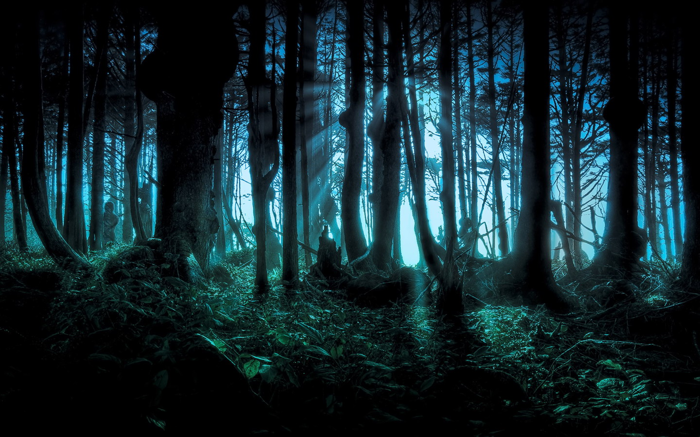 Mystery Forest 658