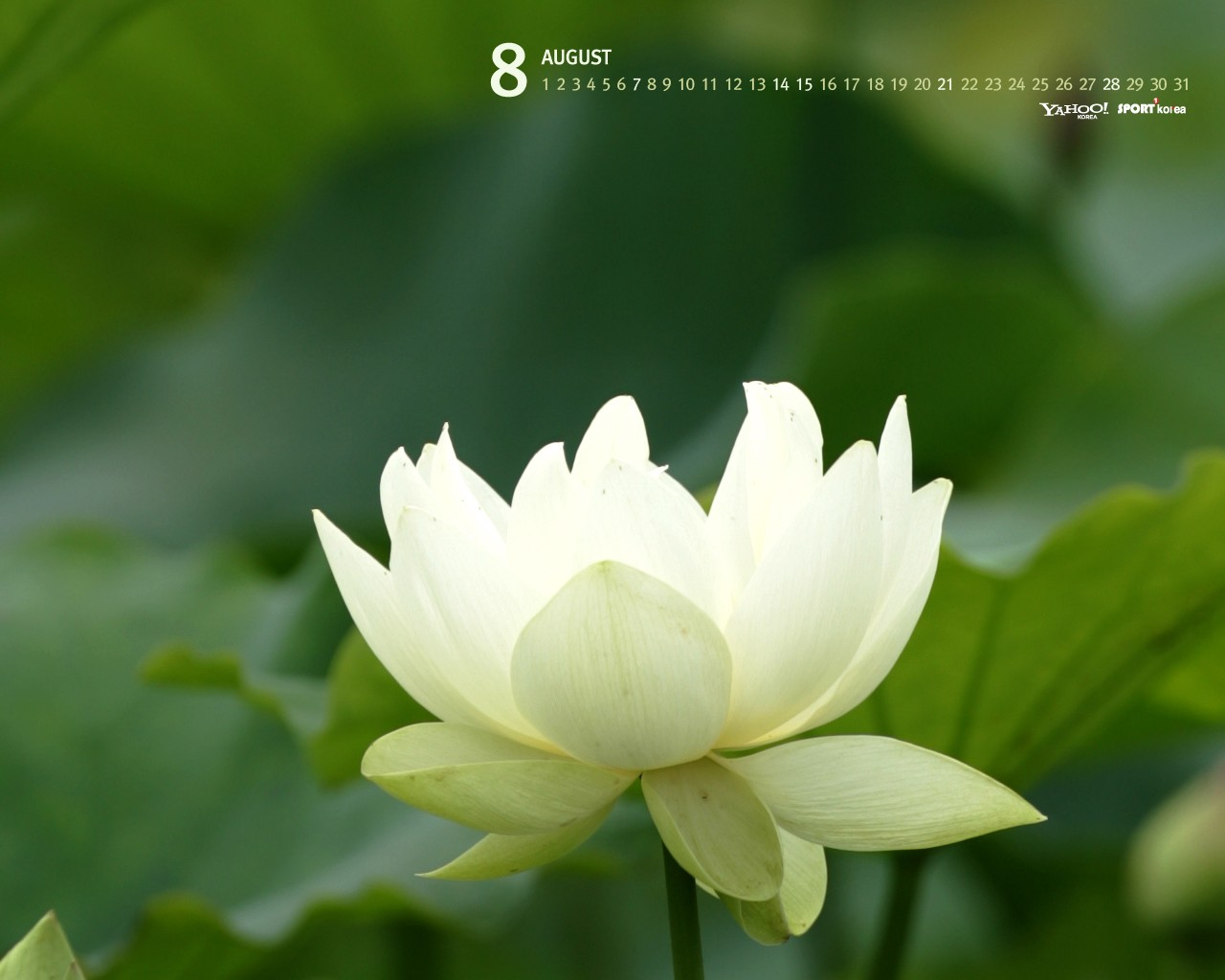 South Korea August Calendar Wallpaper 29821