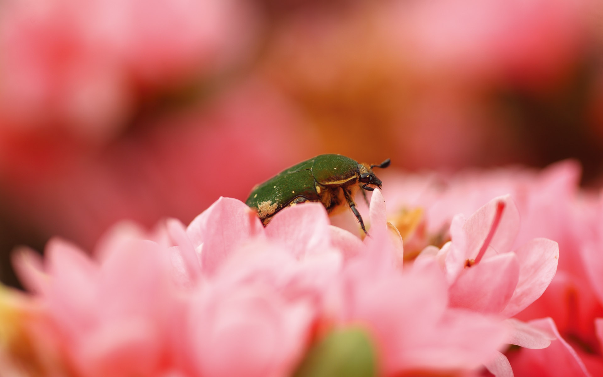 Widescreen insect photo material 1036