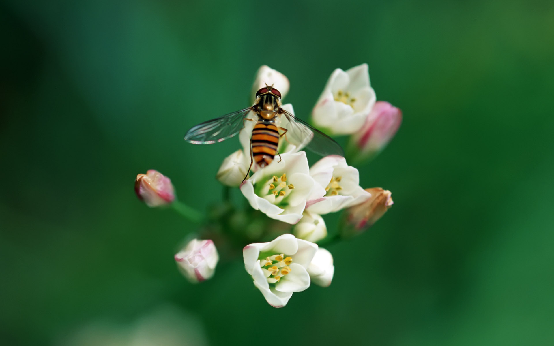 Widescreen insect photo material 1209