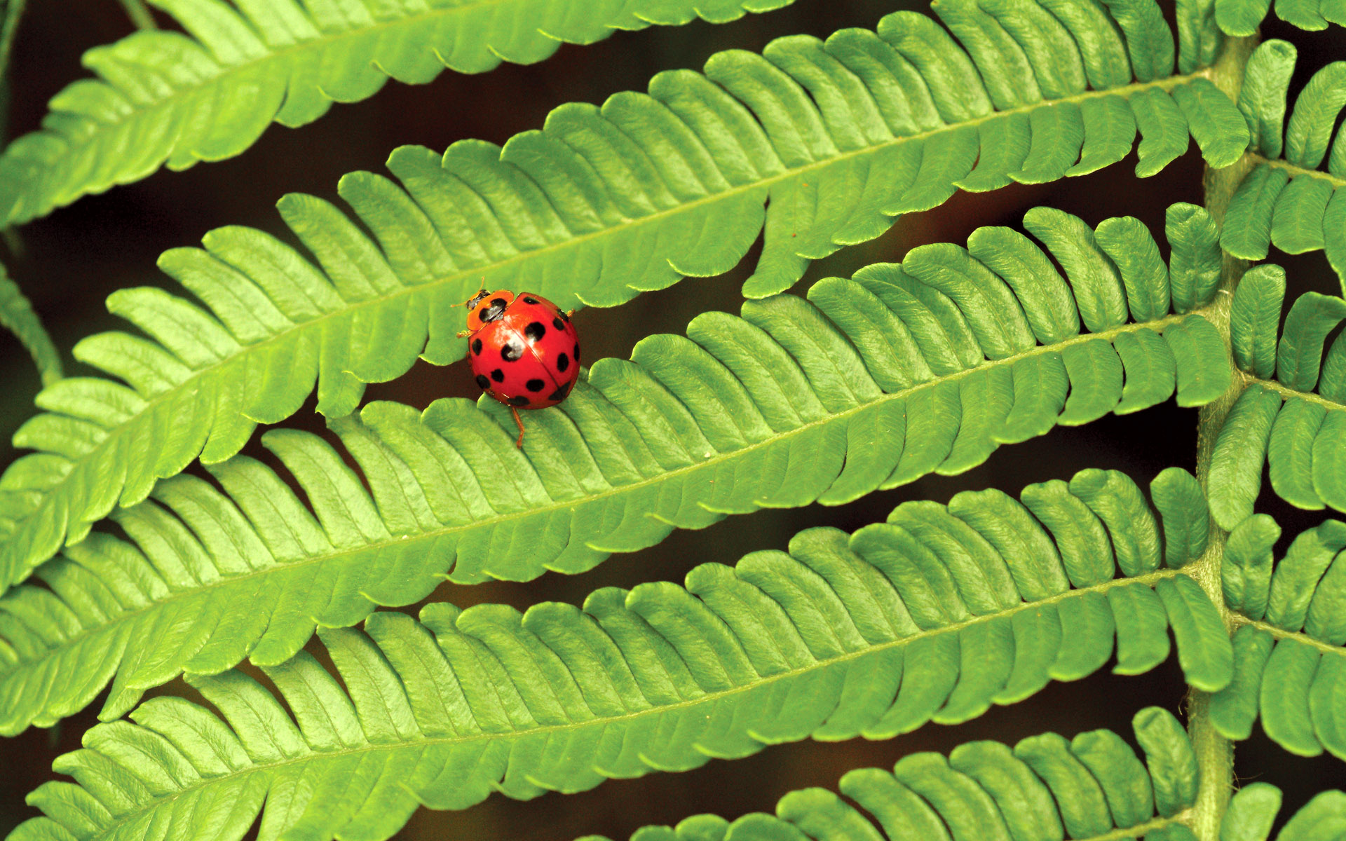 Widescreen insect photo material 1382