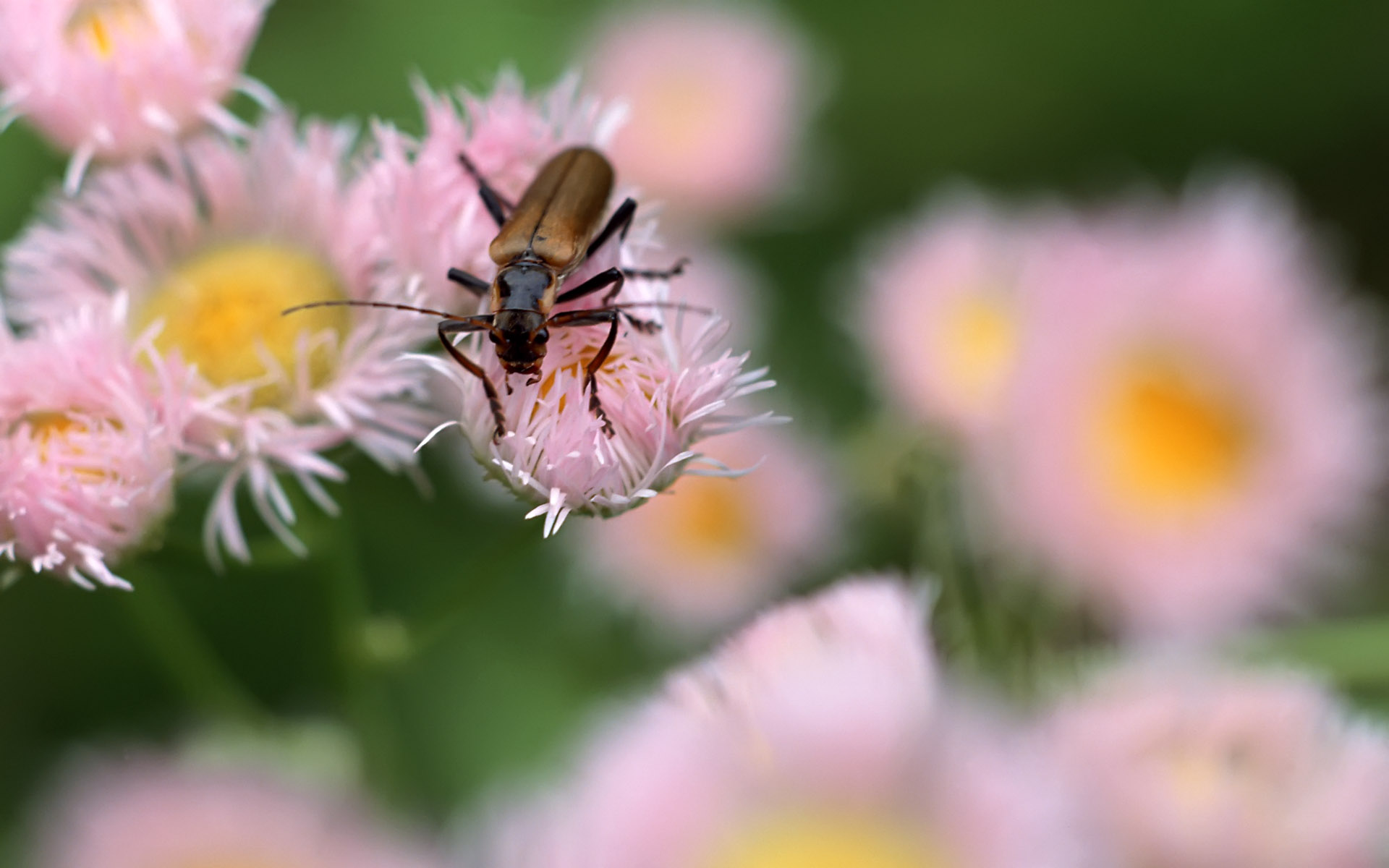 Widescreen insect photo material 2065