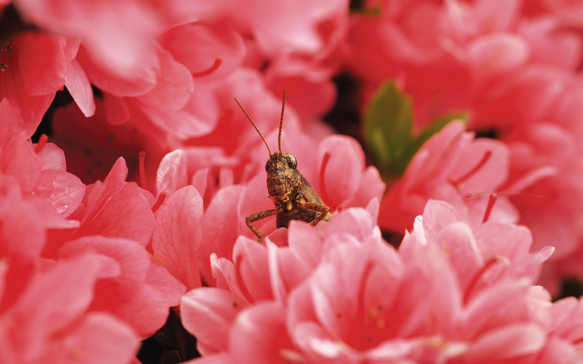 Widescreen insect photo material 3054