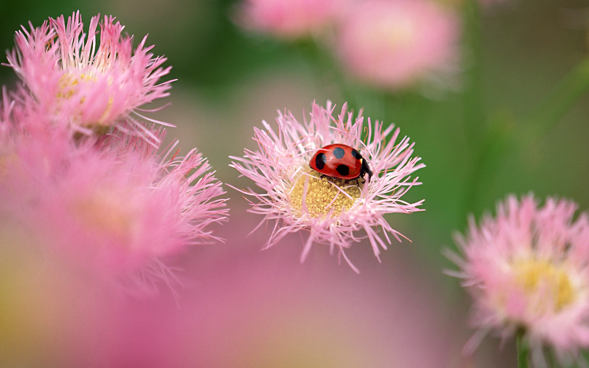 Widescreen insect photo material 337