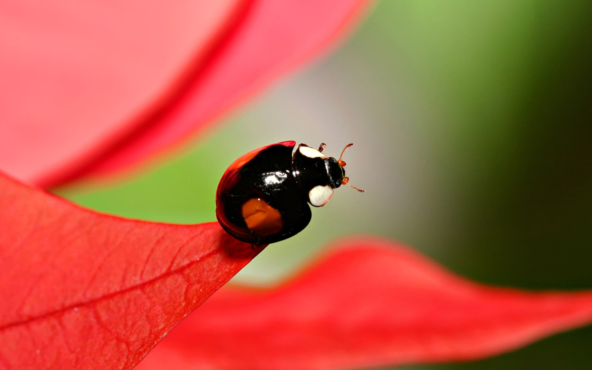 Widescreen insect photo material 4121