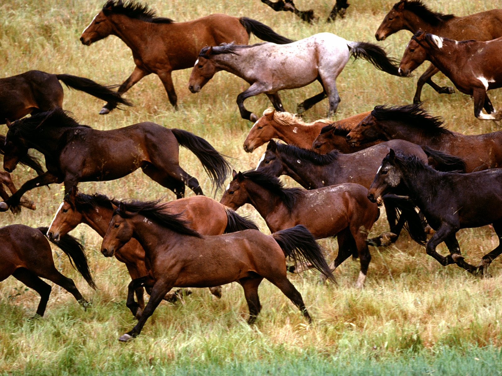 High Definition Wallpapers Horse pictures 1383
