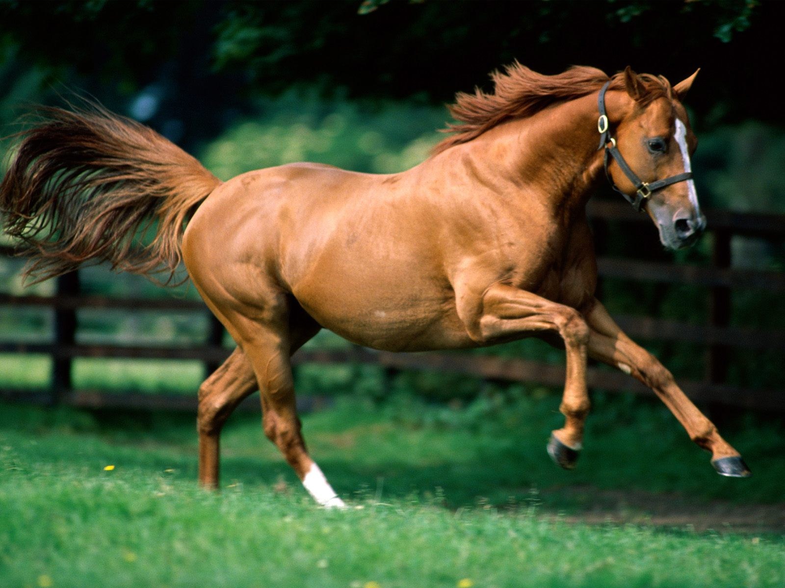 High Definition Wallpapers Horse pictures 163