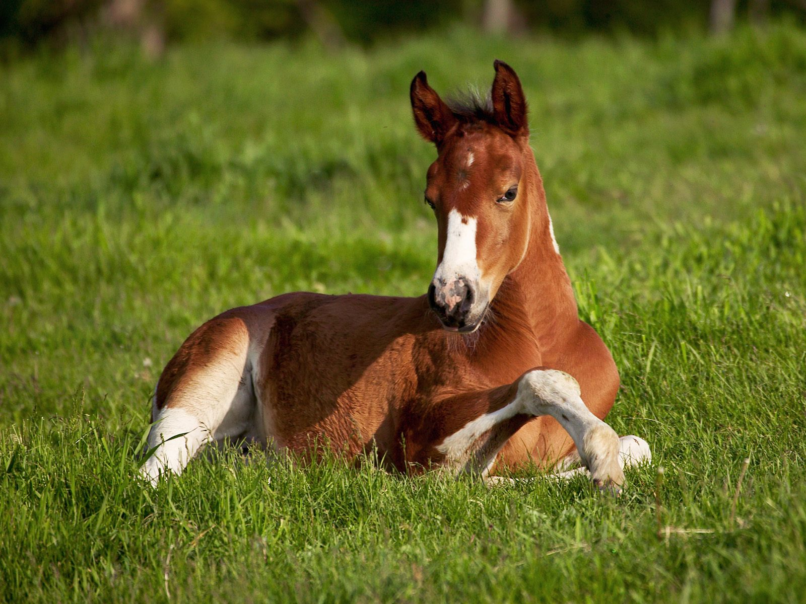 High Definition Wallpapers Horse pictures 1897