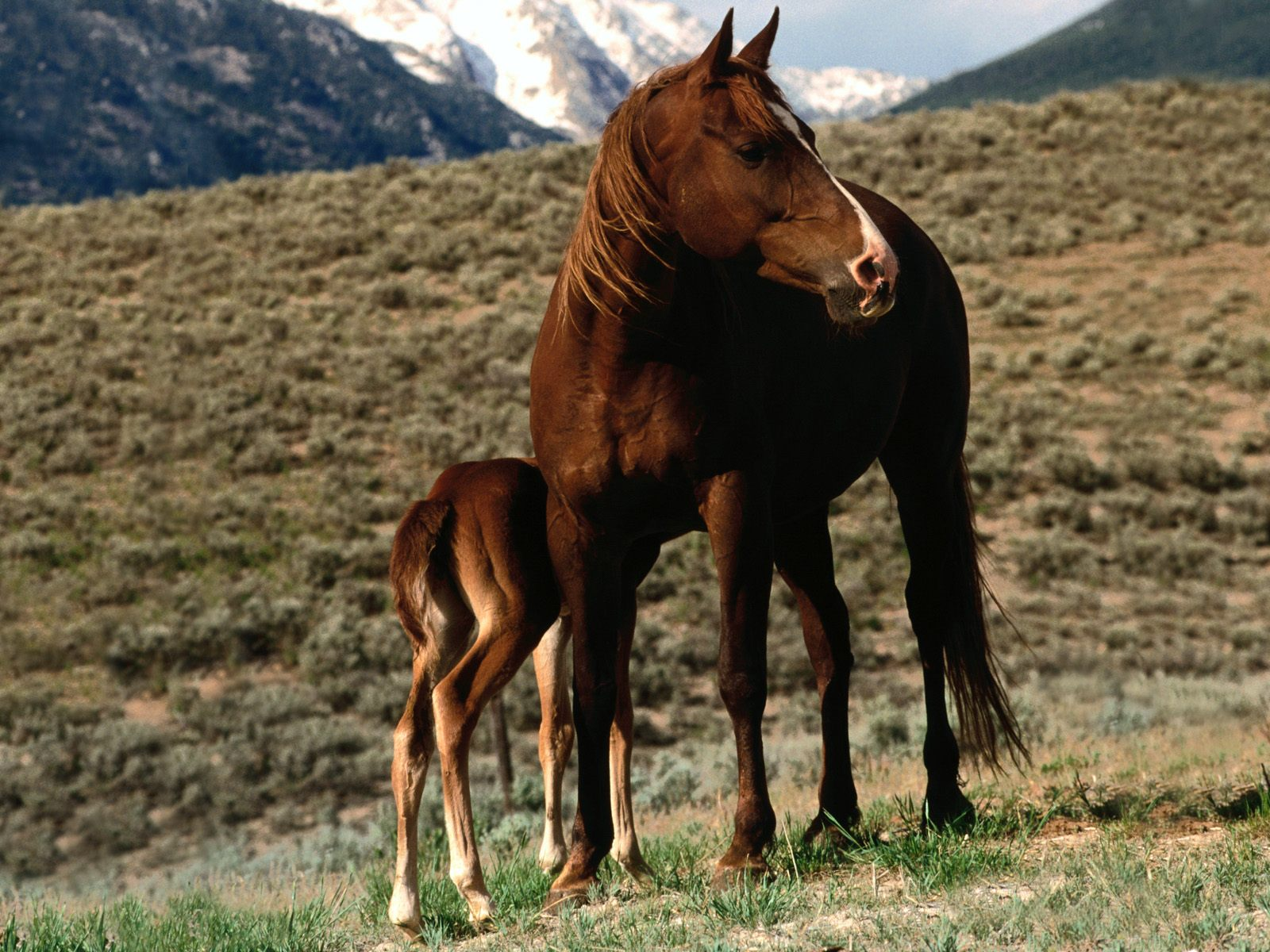 High Definition Wallpapers Horse pictures 2402