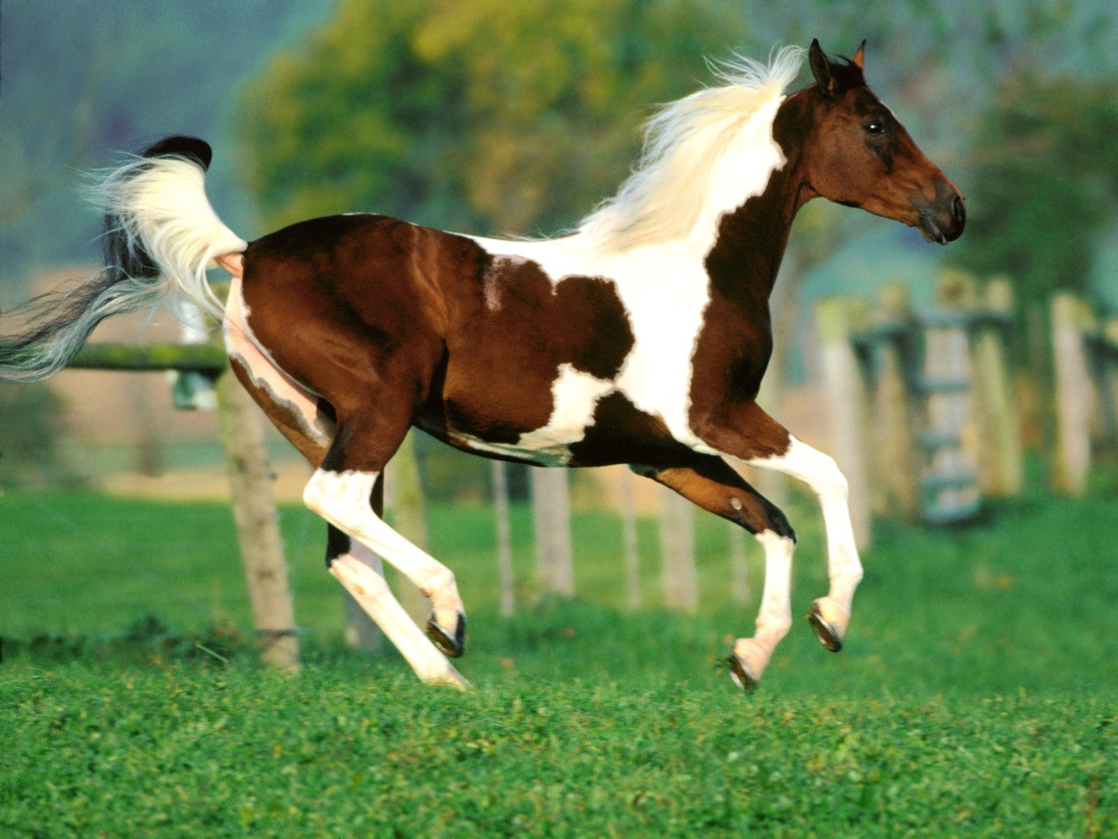 High Definition Wallpapers Horse pictures 338