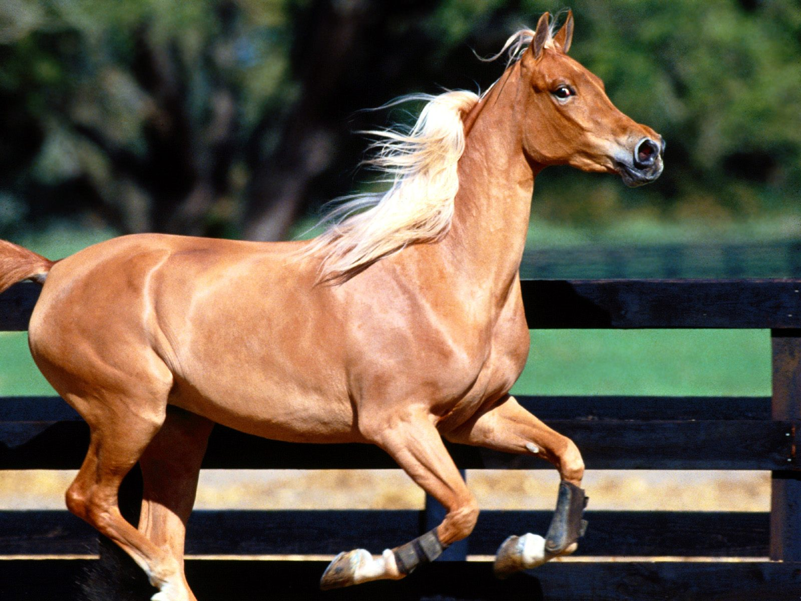 High Definition Wallpapers Horse pictures 4122