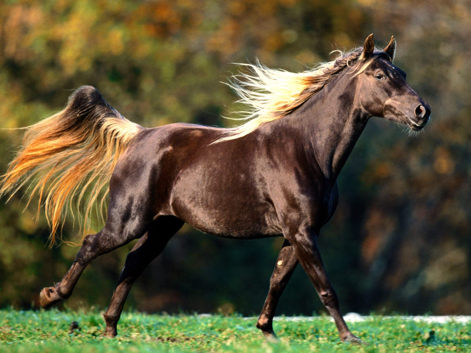 High Definition Wallpapers Horse pictures 5283