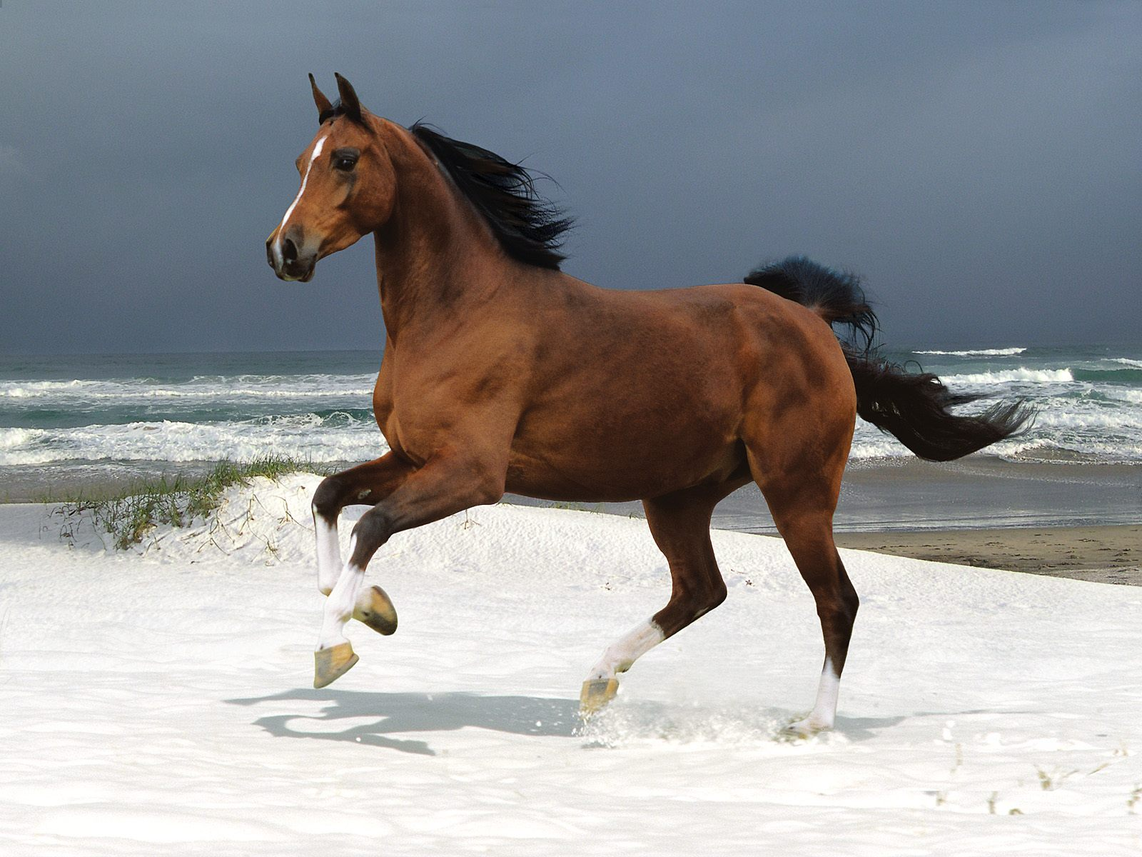 High Definition Wallpapers Horse pictures 6271