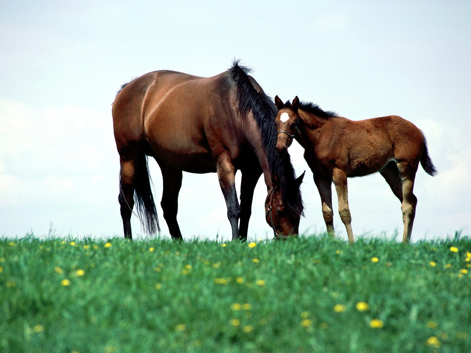 High Definition Wallpapers Horse pictures 863