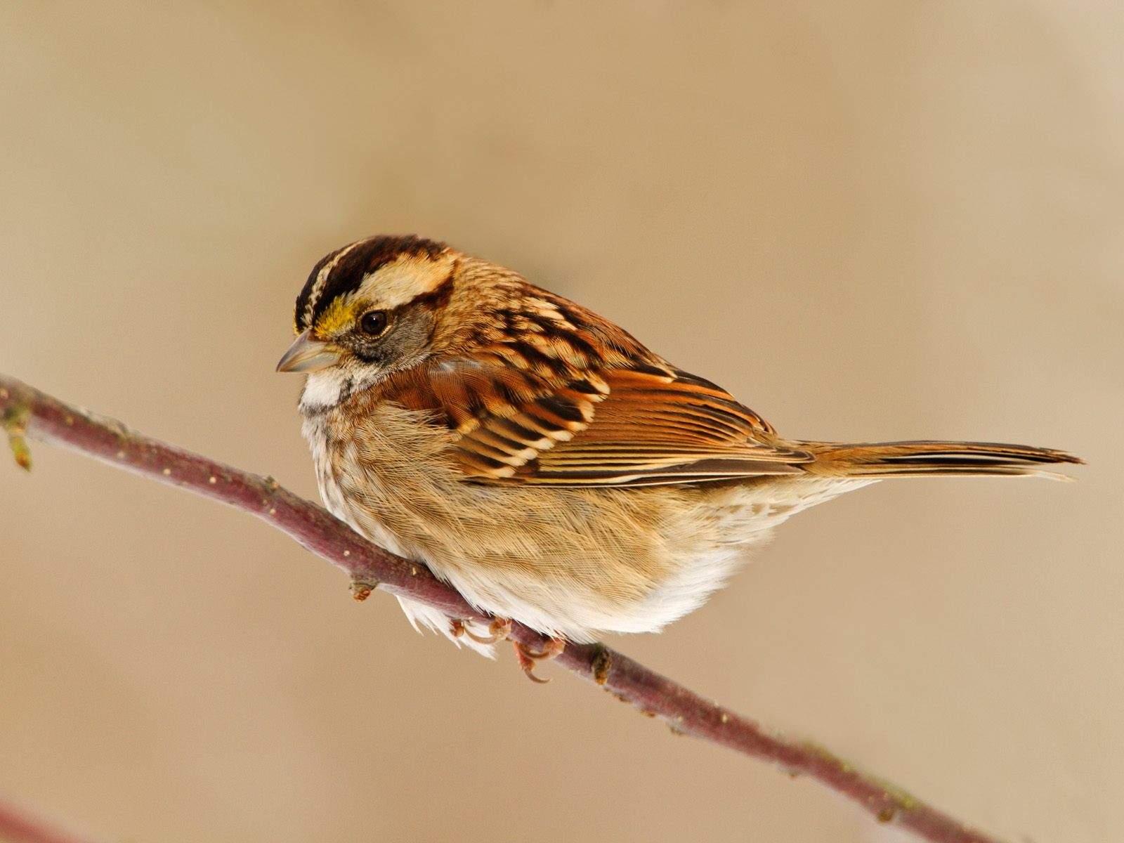 High-resolution pictures of birds 164