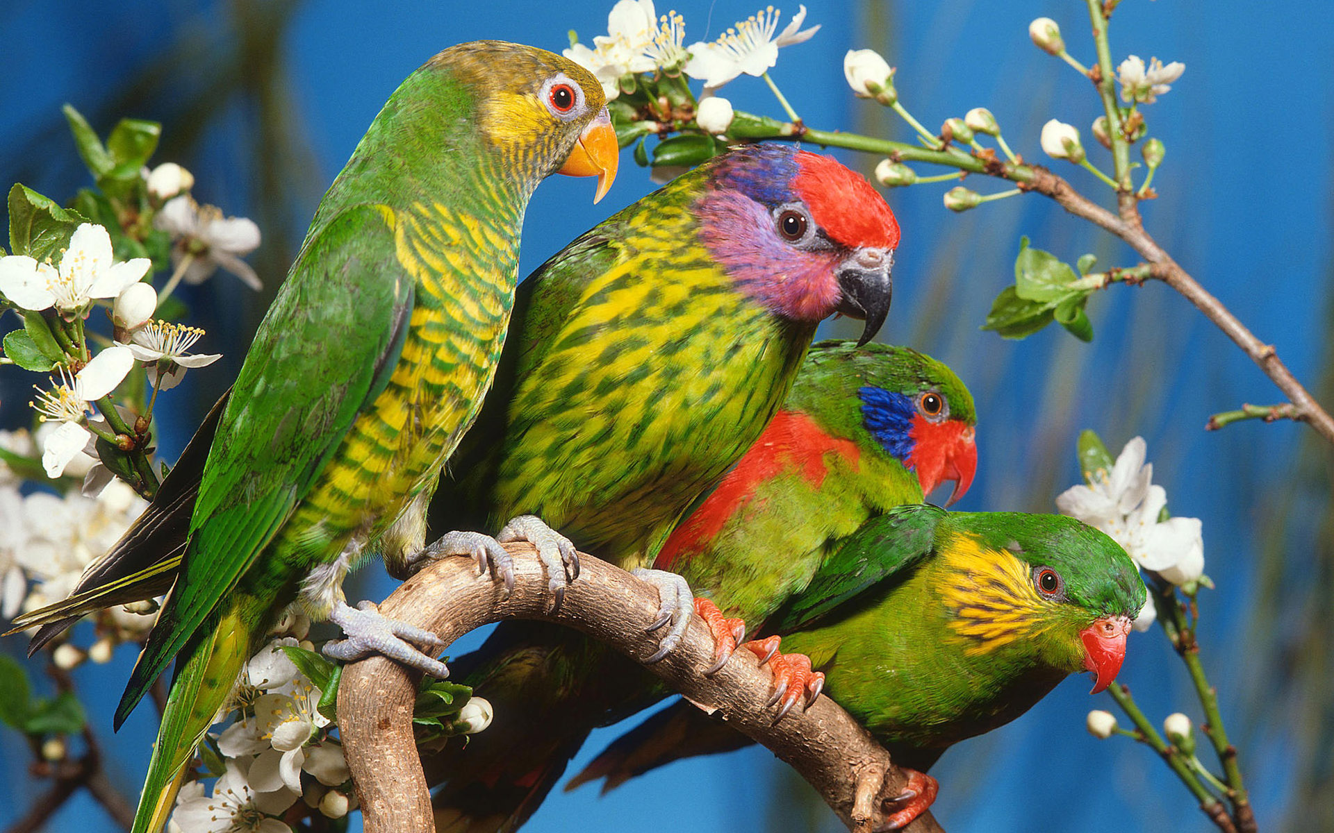 Widescreen Birds photo 17136