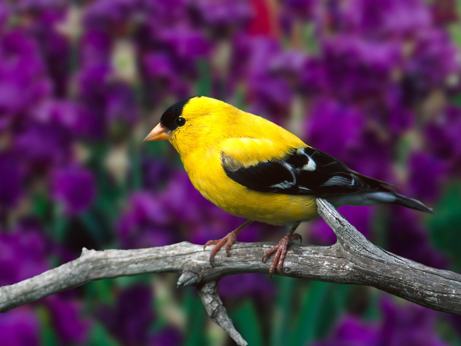 high resolution pictures of birds 1728 birds photo animal