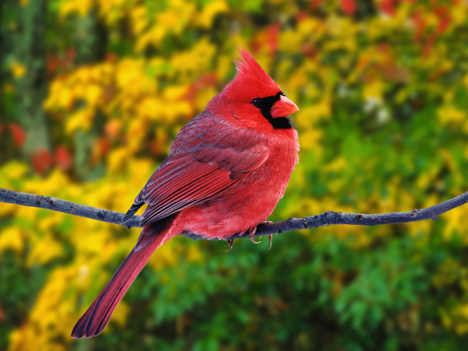 High-resolution pictures of birds 2403