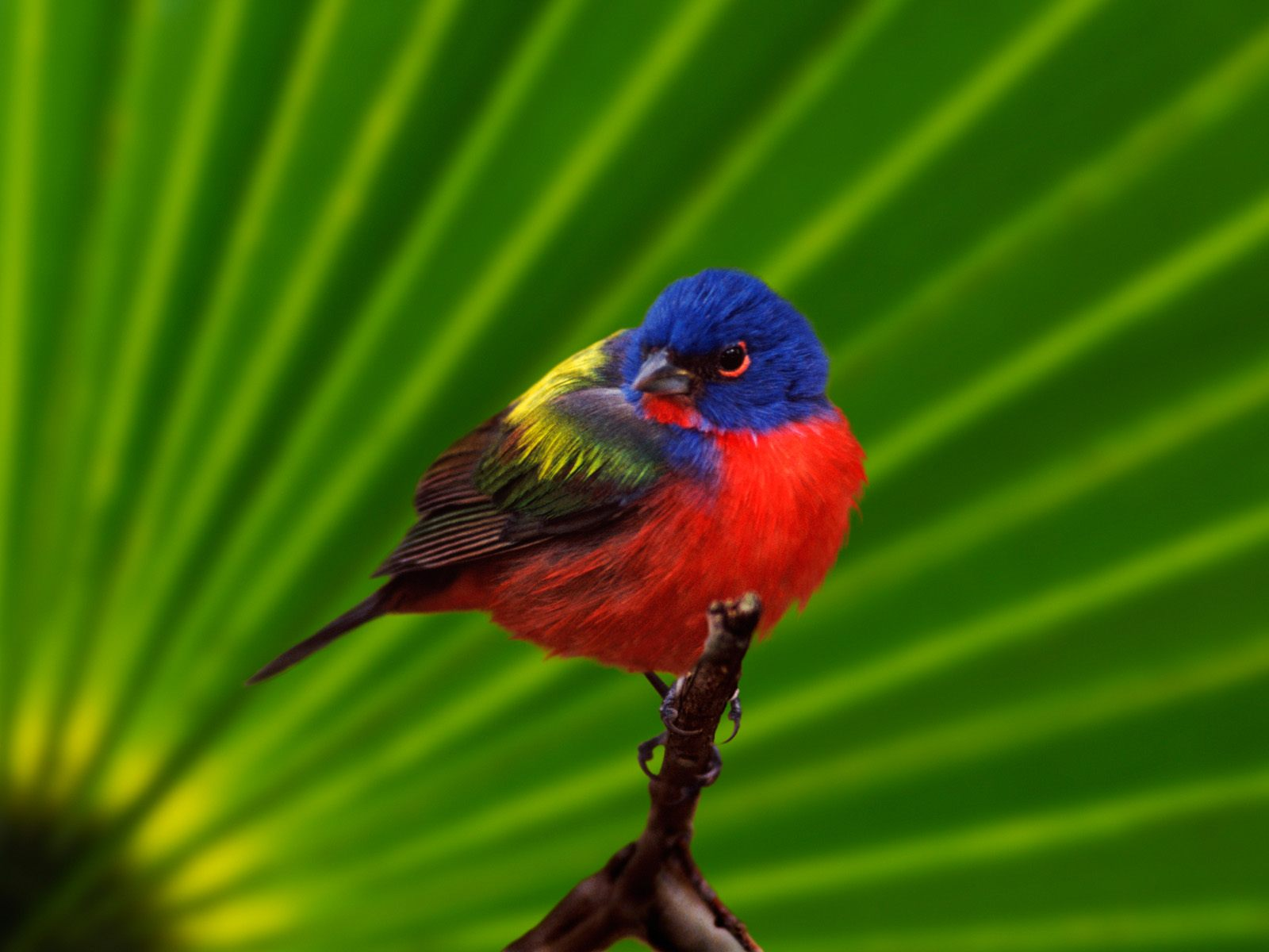 High-resolution pictures of birds 2569