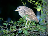 High-resolution pictures of birds 2894