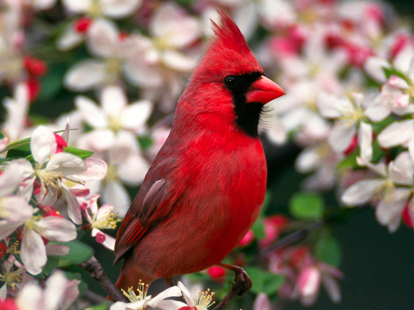High-resolution pictures of birds 3218
