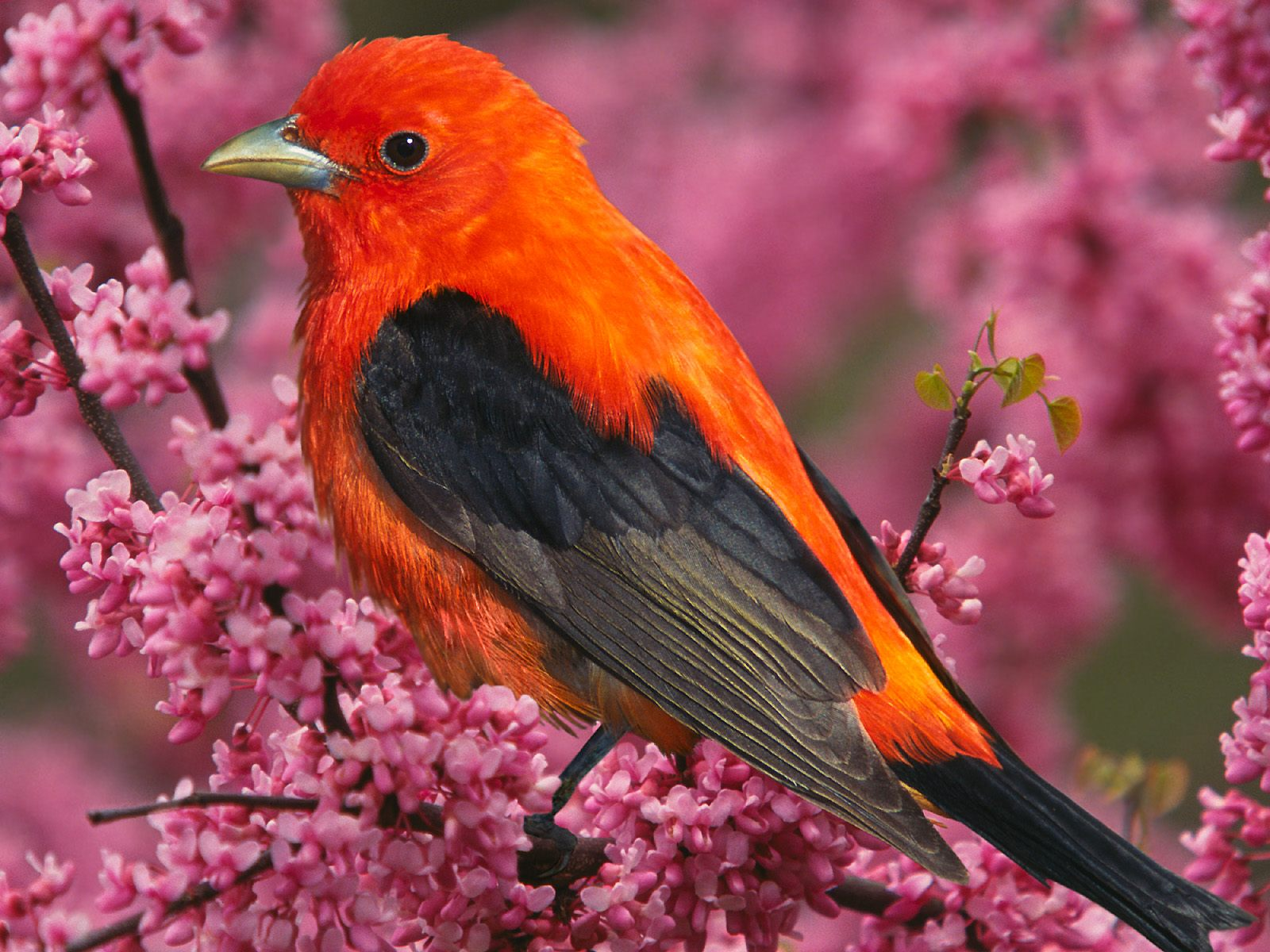 High-resolution pictures of birds 3377