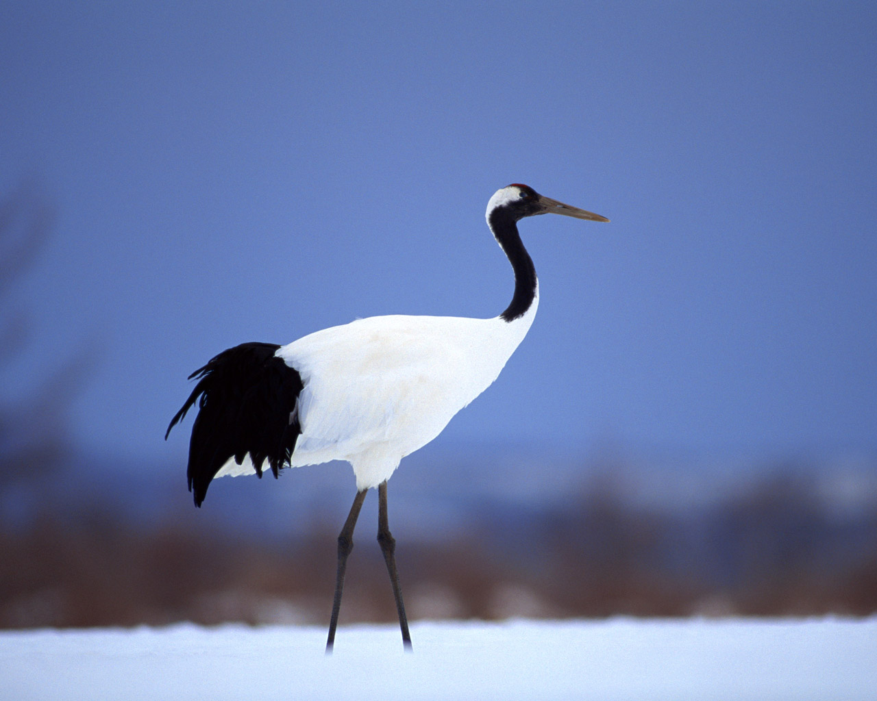 High-resolution pictures of birds 3531