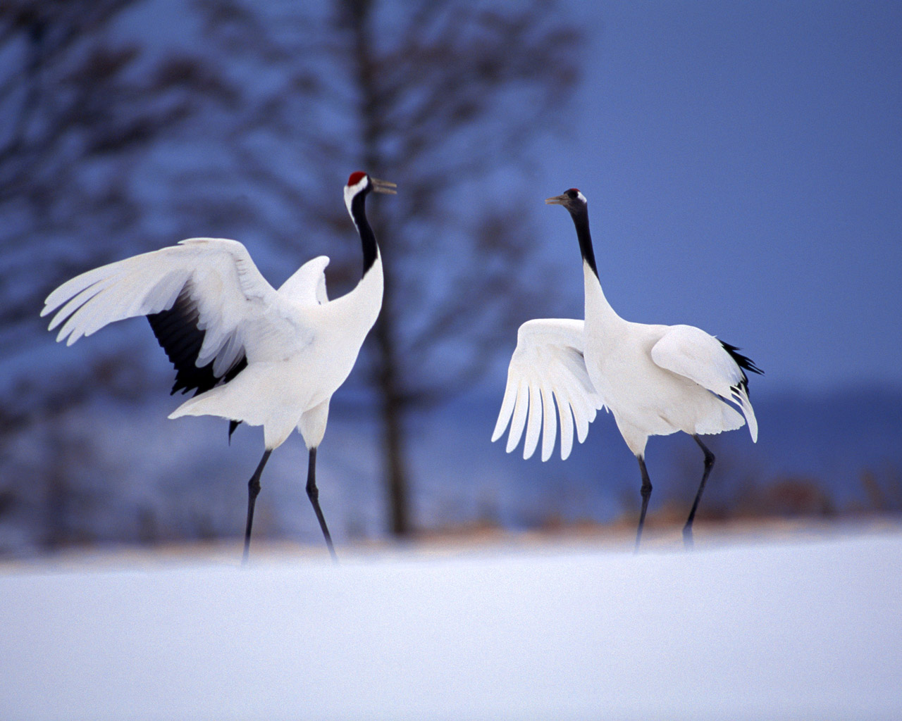 High-resolution pictures of birds 3680