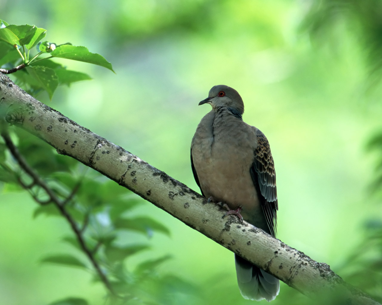 High-resolution pictures of birds 5426