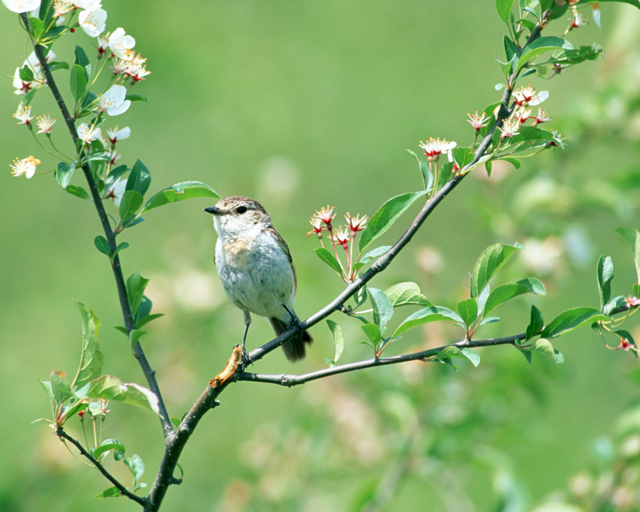 High-resolution pictures of birds 5568