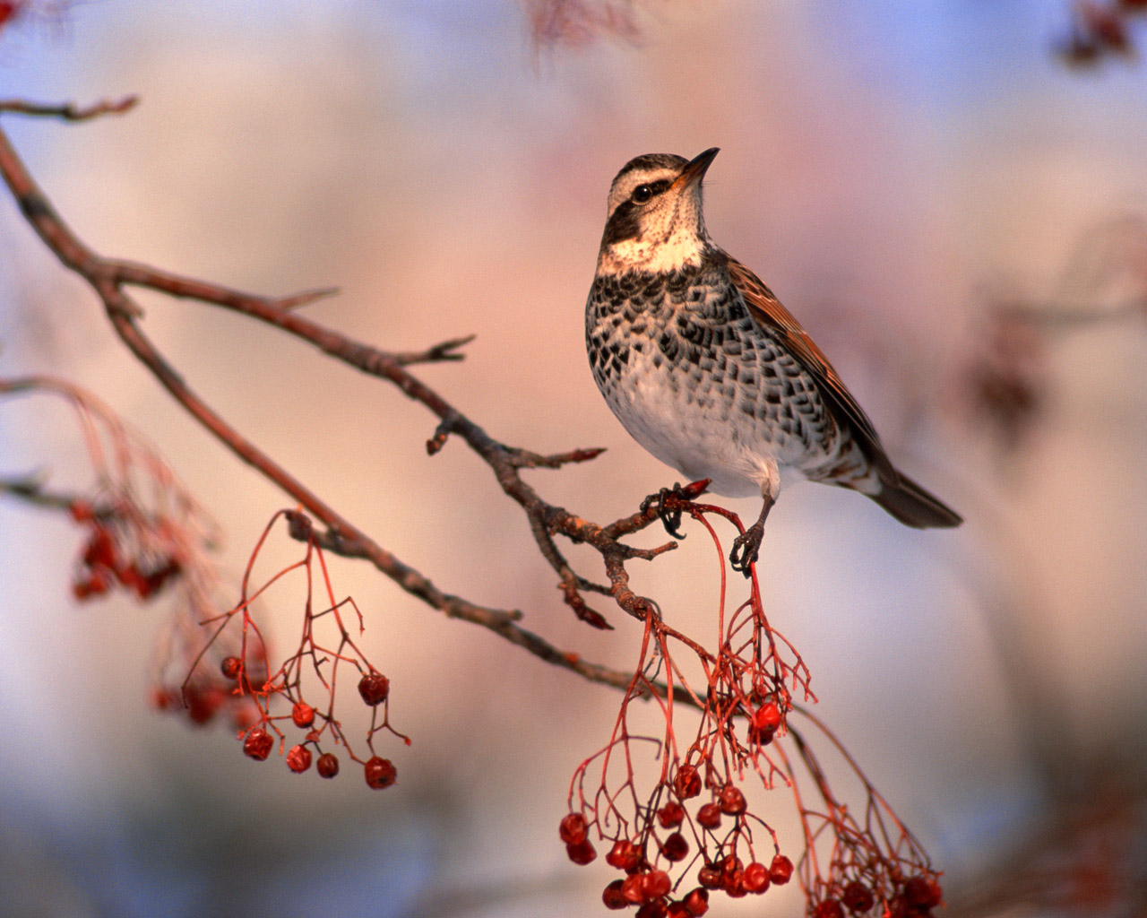 High-resolution pictures of birds 5709