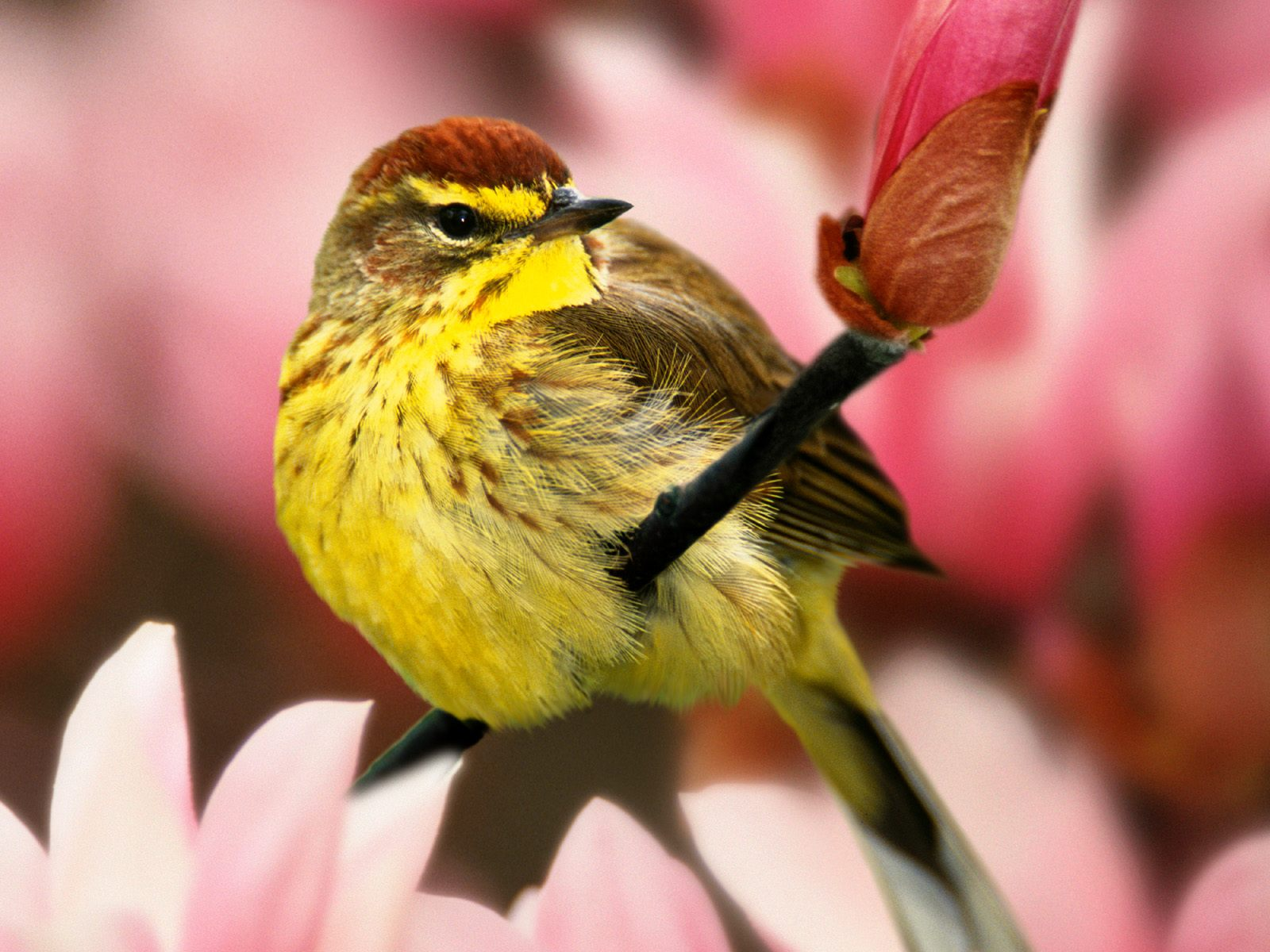 High-resolution pictures of birds 689